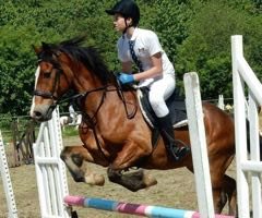 FHS Showjumping